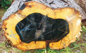 آبنوس و خواص بی نظیر این چوب